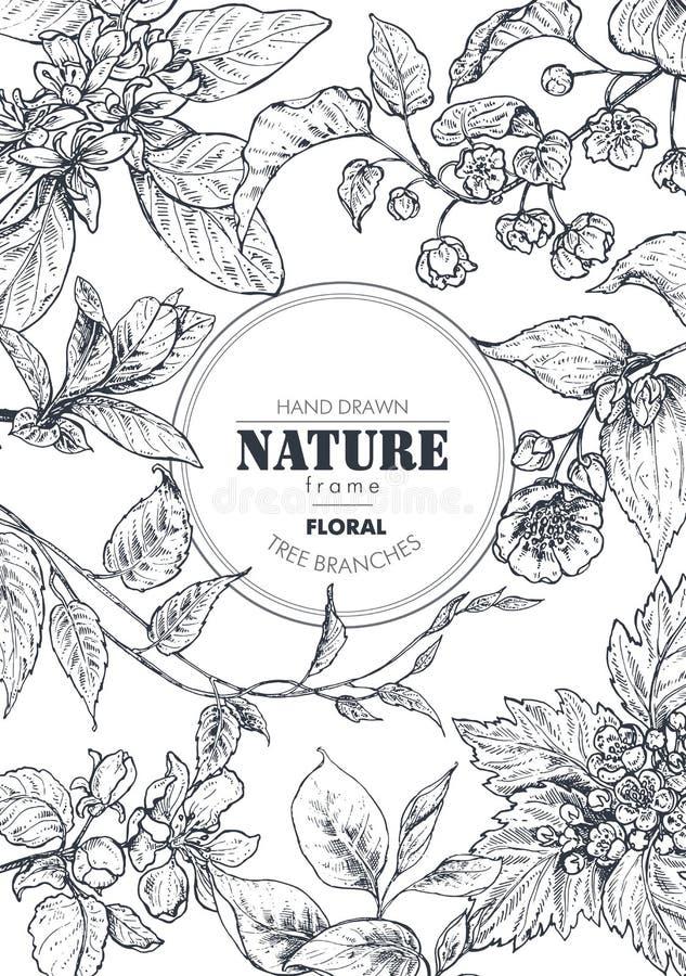 Όμορφο διανυσματικό πλαίσιο με συρμένους τους χέρι κλάδους, τα λουλούδια και τις εγκαταστάσεις διανυσματική απεικόνιση