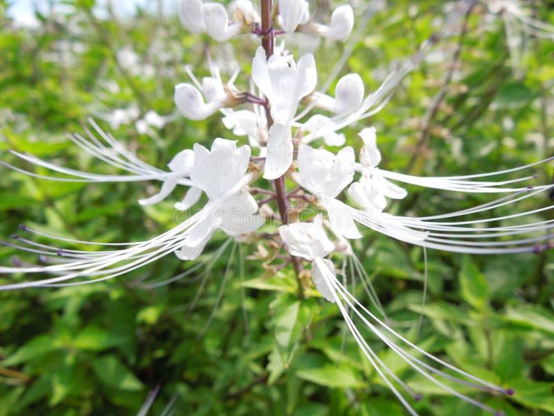 Όμορφο λεπτό άσπρο λουλούδι στοκ εικόνες με δικαίωμα ελεύθερης χρήσης