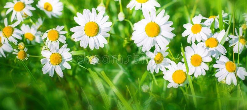 Όμορφο ευρύ θερινό υπόβαθρο φύσης γωνίας στοκ φωτογραφίες