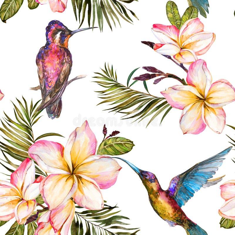 Όμορφο ζωηρόχρωμο colibri, λουλούδια plumeria και φύλλα φοινικών στο άσπρο υπόβαθρο Εξωτικό τροπικό άνευ ραφής σχέδιο απεικόνιση αποθεμάτων