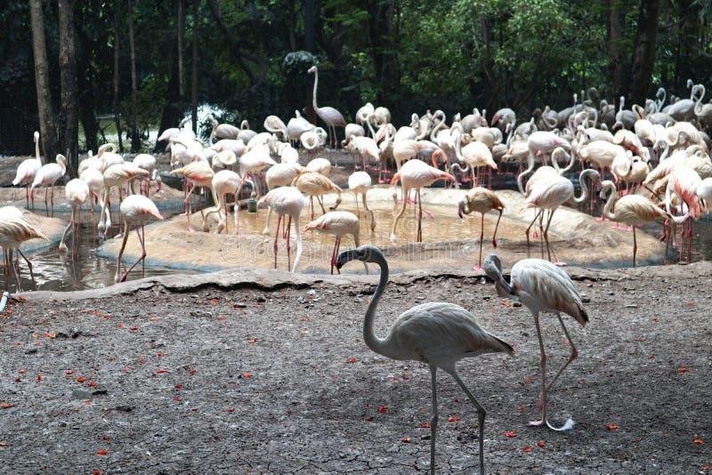 Όμορφο ζώο φλαμίγκο κινηματογραφήσεων σε πρώτο πλάνο στα δημόσια πάρκα στοκ φωτογραφία με δικαίωμα ελεύθερης χρήσης