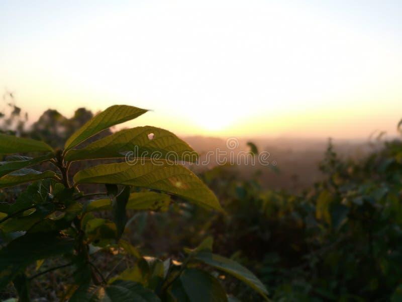 Όμορφο ηλιοβασίλεμα και φύλλα από το υψηλό βουνό στοκ εικόνες