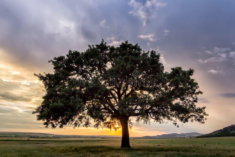 Όμορφο ηλιοβασίλεμα με ένα μόνο δέντρο σε έναν τομέα, ο ήλιος ρύθμισης που λάμπει μέσω των κλάδων και των σύννεφων στοκ εικόνες με δικαίωμα ελεύθερης χρήσης