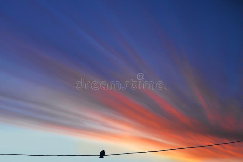 Όμορφο ηλιοβασίλεμα με μια σιλουέτα ενός πουλιού πάνω σε ένα σύρμα στοκ φωτογραφίες με δικαίωμα ελεύθερης χρήσης