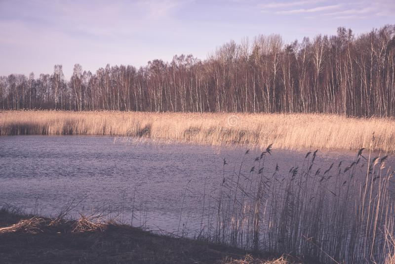 Όμορφο ηλιοβασίλεμα πέρα από τη λίμνη μεταξύ των καλάμων - εκλεκτής ποιότητας αναδρομικό ε στοκ φωτογραφίες με δικαίωμα ελεύθερης χρήσης