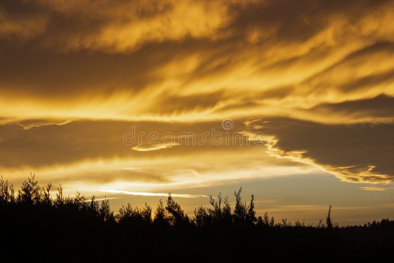 Όμορφο ηλιοβασίλεμα πέρα από τους κλάδους φρακτών κωνοφόρων στοκ εικόνες