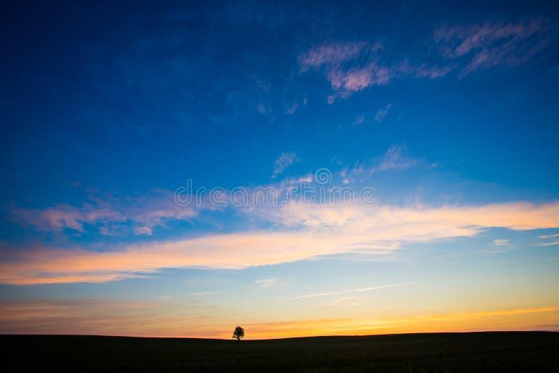 Όμορφο ηλιοβασίλεμα στον τομέα Μόνη δρύινη σκιαγραφία δέντρων στην αυγή Έννοια έμπνευσης στοκ εικόνα με δικαίωμα ελεύθερης χρήσης