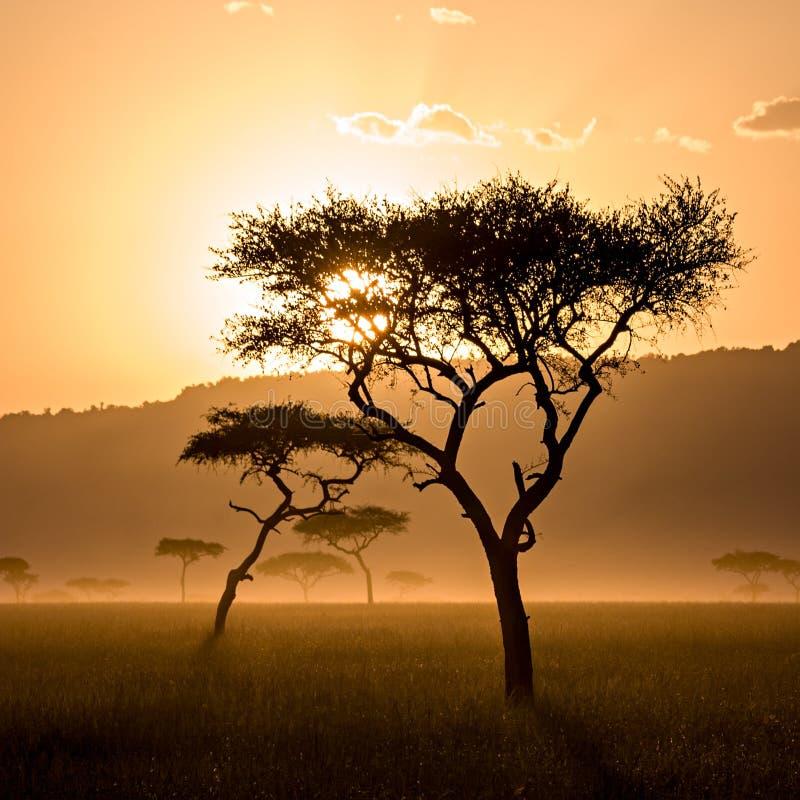 Όμορφο ηλιοβασίλεμα σε Massai Mara στοκ εικόνα με δικαίωμα ελεύθερης χρήσης