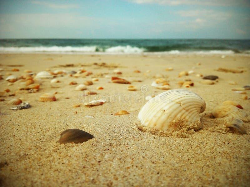 Όμορφο θαλασσινό κοχύλι στην παραλία στοκ εικόνες με δικαίωμα ελεύθερης χρήσης