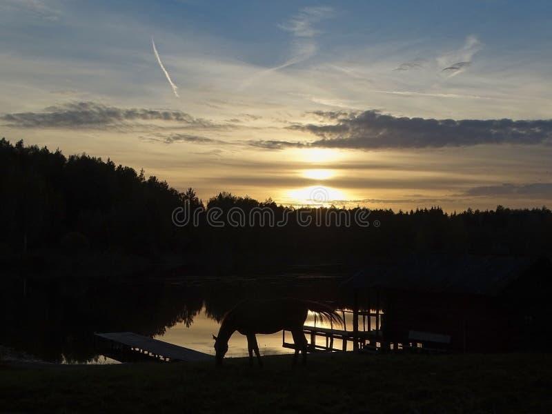 όμορφο θερινό ηλιοβασίλεμα φύσης βραδιού καυτό πολύ στοκ φωτογραφίες
