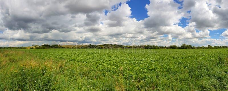 Όμορφο θερινό τοπίο με έναν πράσινο τομέα στη Ρωσία στοκ φωτογραφίες με δικαίωμα ελεύθερης χρήσης