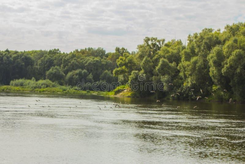 Όμορφο θερινό τοπίο του ποταμού Ros Chernihiv Ουκρανία στοκ φωτογραφία