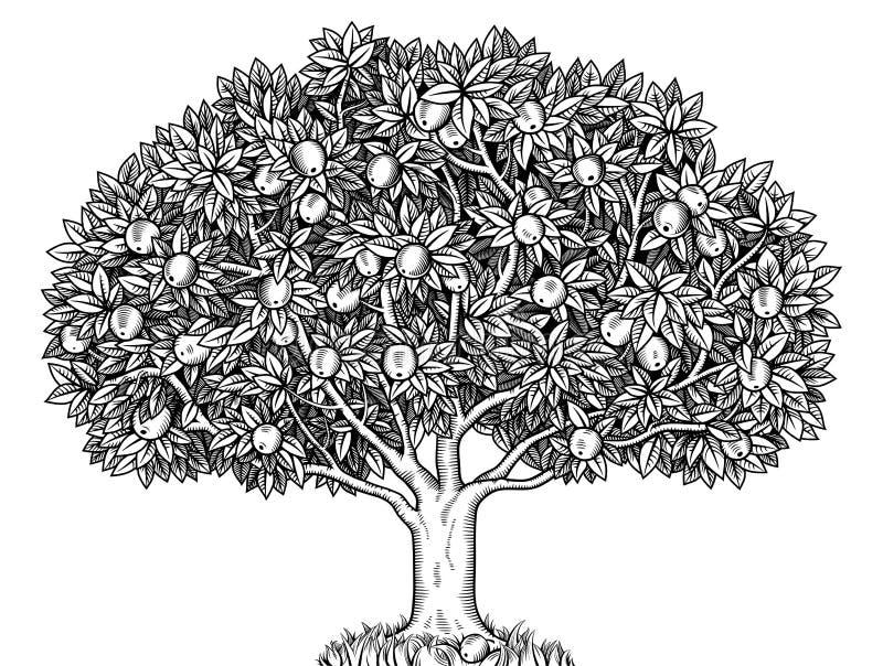 όμορφο διάνυσμα δέντρων απεικόνισης μήλων απεικόνιση αποθεμάτων