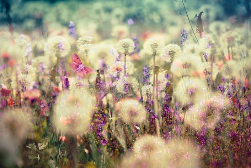 Όμορφο λιβάδι - άνθισμα, ανθίζοντας λουλούδια λιβαδιών στοκ εικόνα