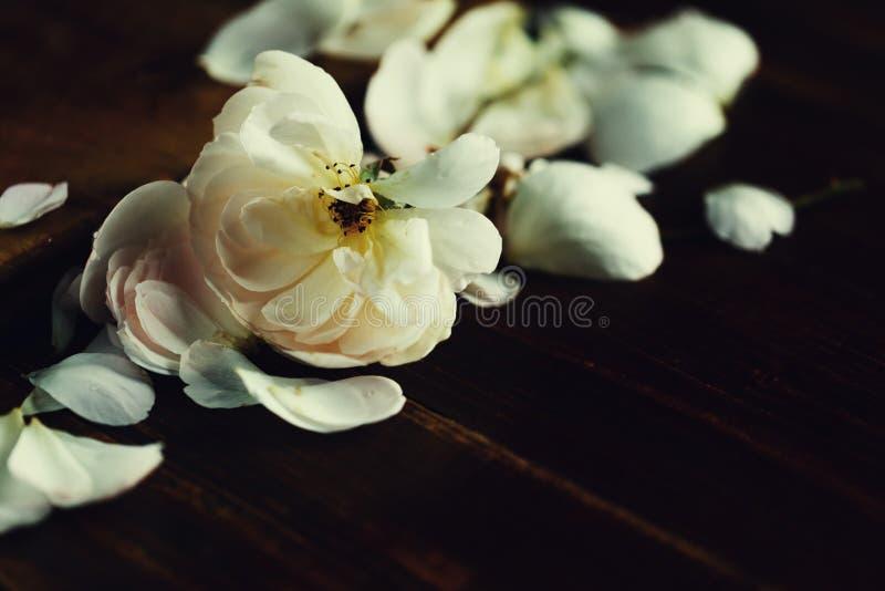Όμορφο ιπτάμενο ανοιχτό ροζ τριαντάφυλλο και πέταλα σε σκούρο ξύλινο φόντο στοκ φωτογραφία με δικαίωμα ελεύθερης χρήσης