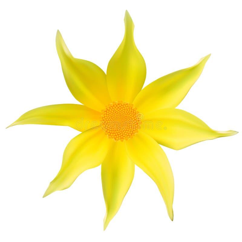 Όμορφο κίτρινο λουλούδι. απεικόνιση αποθεμάτων