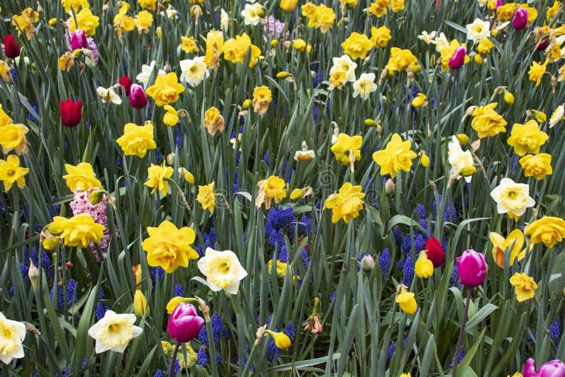 Όμορφο και ζωηρόχρωμο λιβάδι με τα λουλούδια στοκ φωτογραφία με δικαίωμα ελεύθερης χρήσης