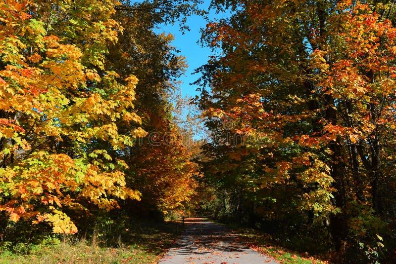 Όμορφο και ζωηρόχρωμο φθινόπωρο Μια αλέα με πεσμένος βγάζει φύλλα στοκ εικόνα με δικαίωμα ελεύθερης χρήσης