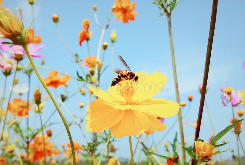 Όμορφο και ρομαντικό λουλούδι φθινοπώρου στοκ εικόνα με δικαίωμα ελεύθερης χρήσης