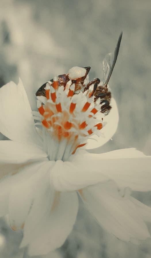Όμορφο και ρομαντικό λουλούδι στοκ εικόνα με δικαίωμα ελεύθερης χρήσης