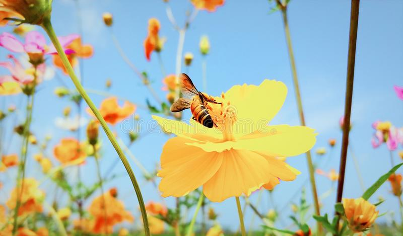 Όμορφο και ρομαντικό λουλούδι στοκ εικόνα