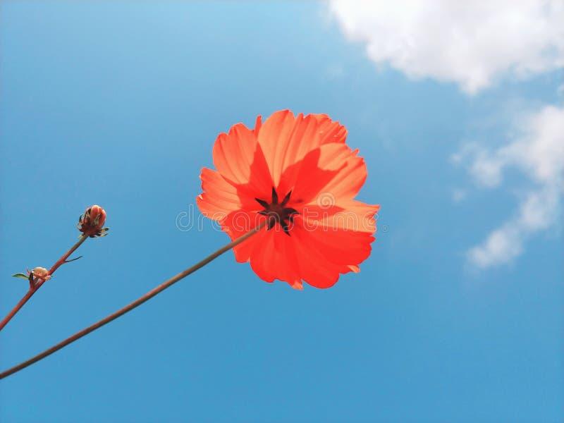 Όμορφο και ρομαντικό λουλούδι στοκ εικόνες με δικαίωμα ελεύθερης χρήσης