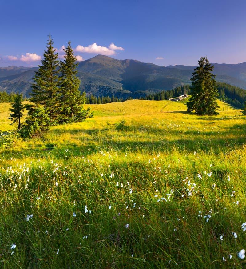 όμορφο καλοκαίρι τοπίων στοκ φωτογραφίες
