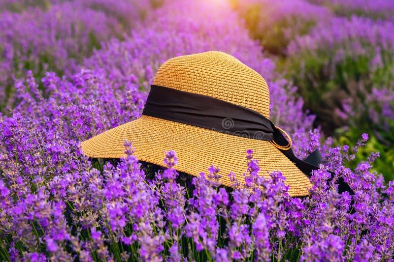 Όμορφο καπέλο σε έναν lavender τομέα μια ηλιόλουστη ημέρα στοκ εικόνες με δικαίωμα ελεύθερης χρήσης