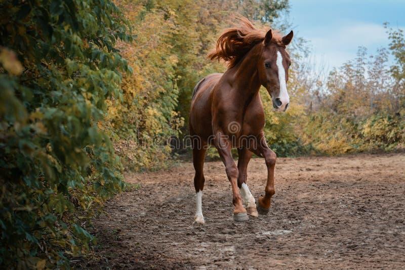 Όμορφο κόκκινο άλογο στο φθινόπωρο ελευθερίας στοκ εικόνα