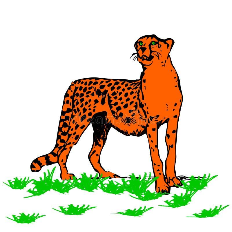 Όμορφο λεοπάρδαλη-αρπακτικό ζώο, στο άσπρο υπόβαθρο διανυσματική απεικόνιση