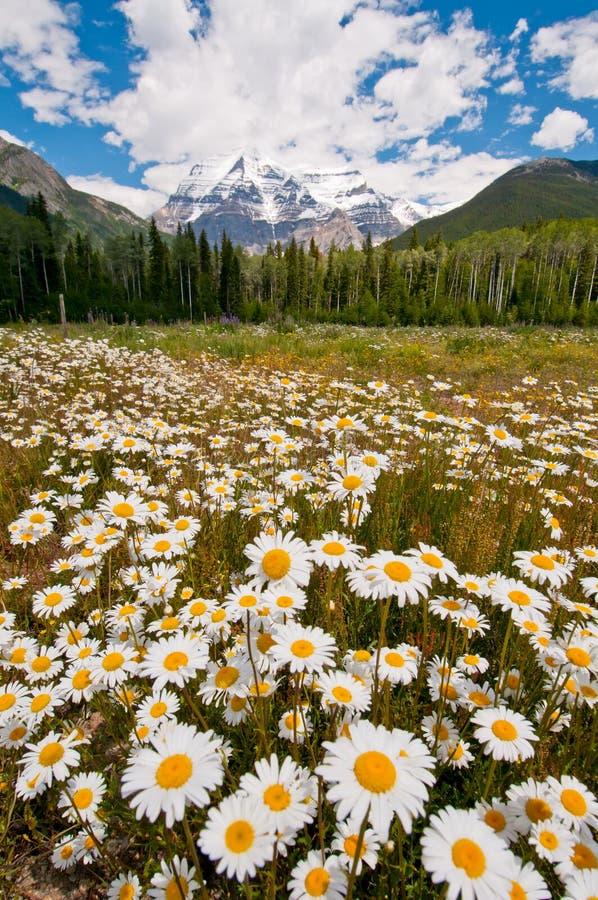 όμορφο λευκό βουνών λου& στοκ φωτογραφία