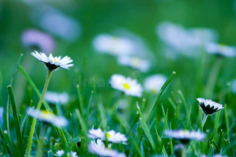 όμορφο λιβάδι λεπτομερ&epsilon στοκ φωτογραφία