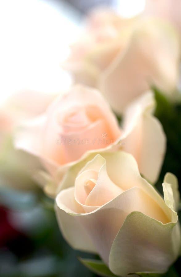 όμορφο λουλούδι ανασκόπησης στοκ εικόνα με δικαίωμα ελεύθερης χρήσης