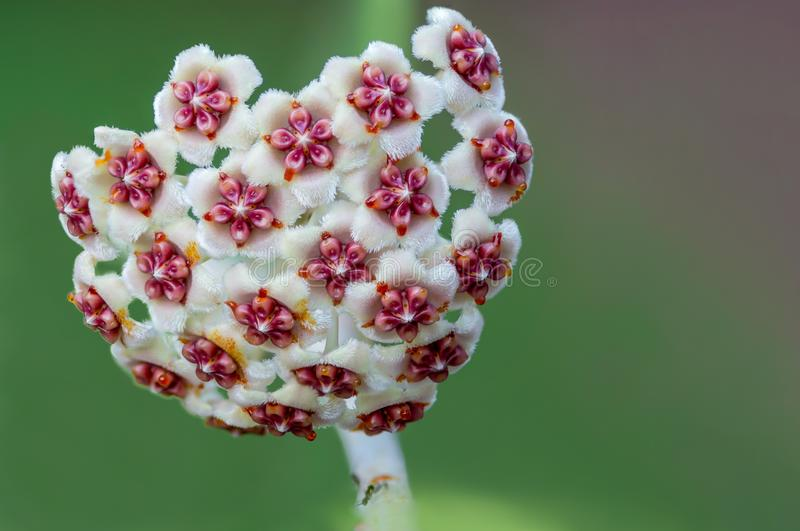 Όμορφο λουλούδι με το υπόβαθρο θαμπάδων στοκ εικόνα με δικαίωμα ελεύθερης χρήσης