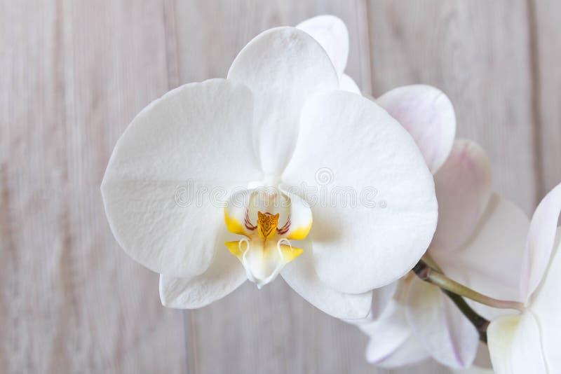 Όμορφο λουλούδι ορχιδεών o Οφθαλμός ορχιδεών στοκ φωτογραφίες με δικαίωμα ελεύθερης χρήσης