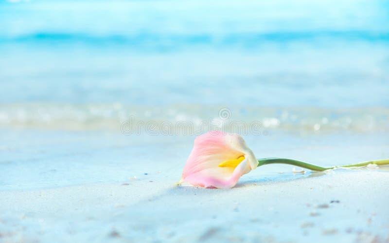Όμορφο λουλούδι που βρίσκεται στην υγρή άμμο στοκ εικόνες με δικαίωμα ελεύθερης χρήσης