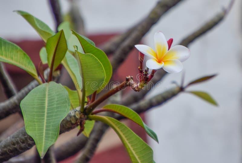 Όμορφο λουλούδι στο δέντρο στοκ φωτογραφίες με δικαίωμα ελεύθερης χρήσης