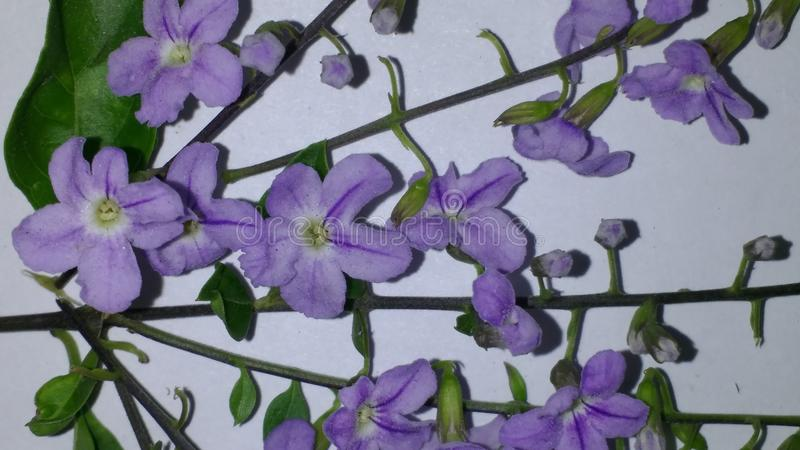 Όμορφο λουλούδι χρώματος στοκ εικόνες