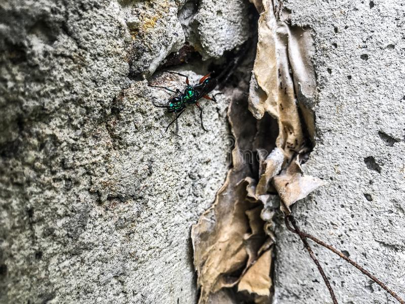Όμορφο μεγάλο μυρμήγκι στοκ φωτογραφίες