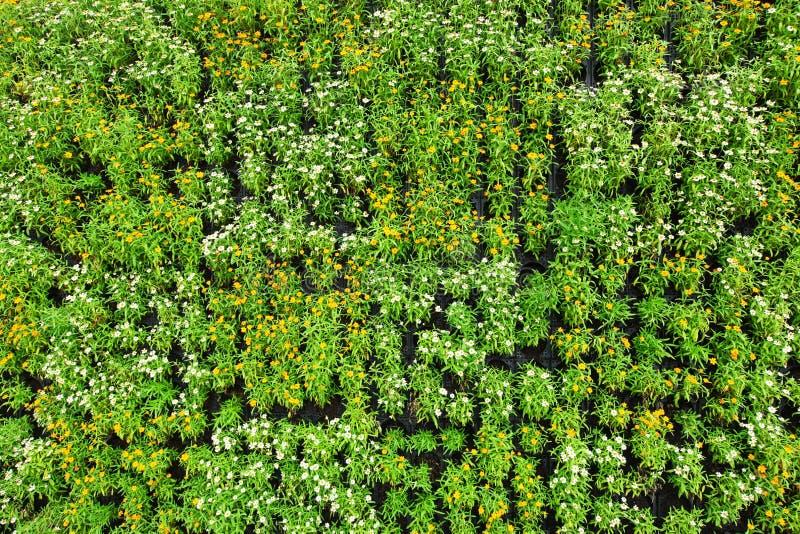 Όμορφο μικρό υπόβαθρο λουλουδιών με τα πράσινα φύλλα στοκ φωτογραφία