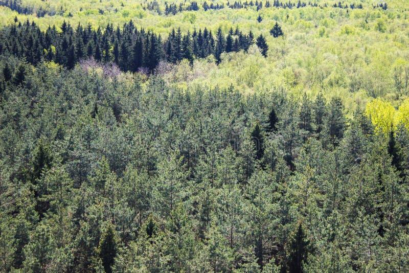 Όμορφο μικτό άνοιξη κομψό δάσος από την υψηλή άποψη γωνίας διανυσματική απεικόνιση