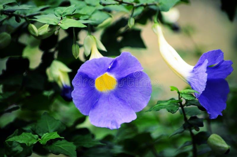 Όμορφο μπλε στοκ εικόνες με δικαίωμα ελεύθερης χρήσης