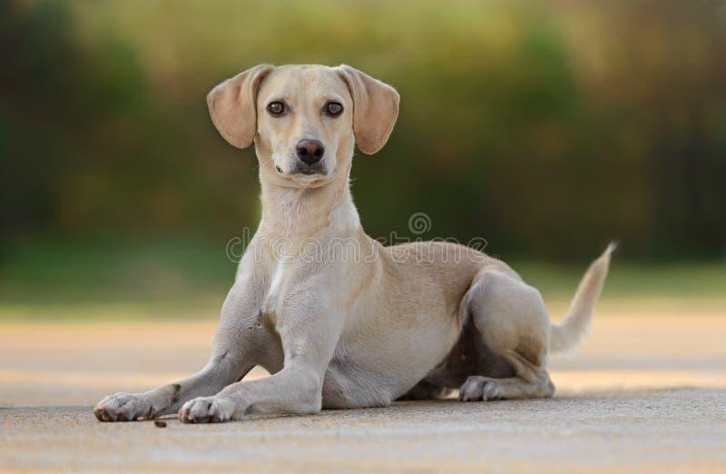 Όμορφο νέο θηλυκό σκυλί στοκ φωτογραφίες με δικαίωμα ελεύθερης χρήσης