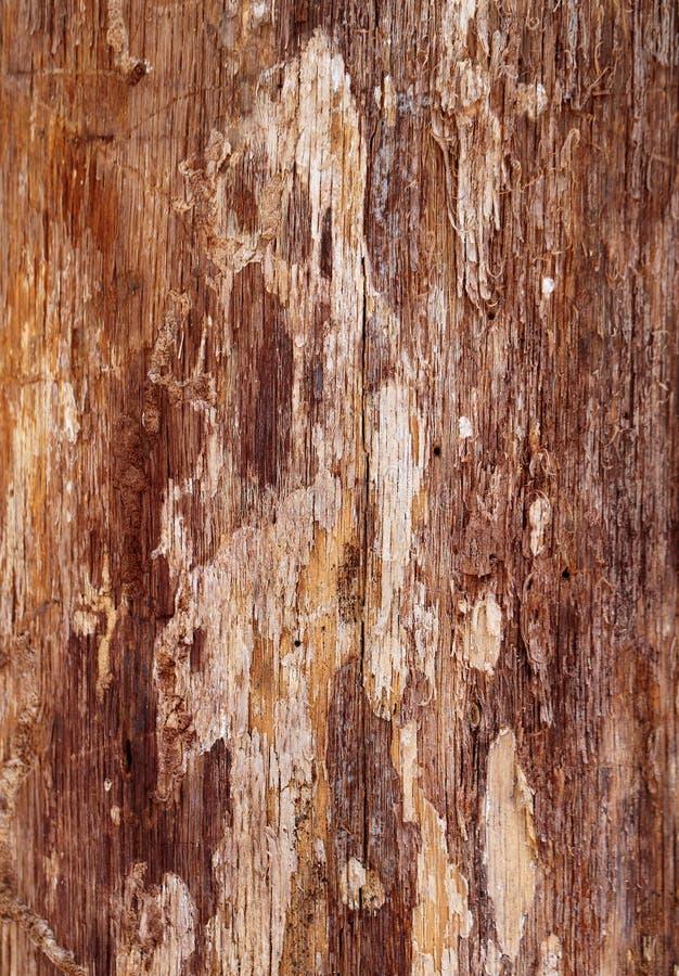 Όμορφο ξύλινο πεύκο σύστασης στοκ φωτογραφίες