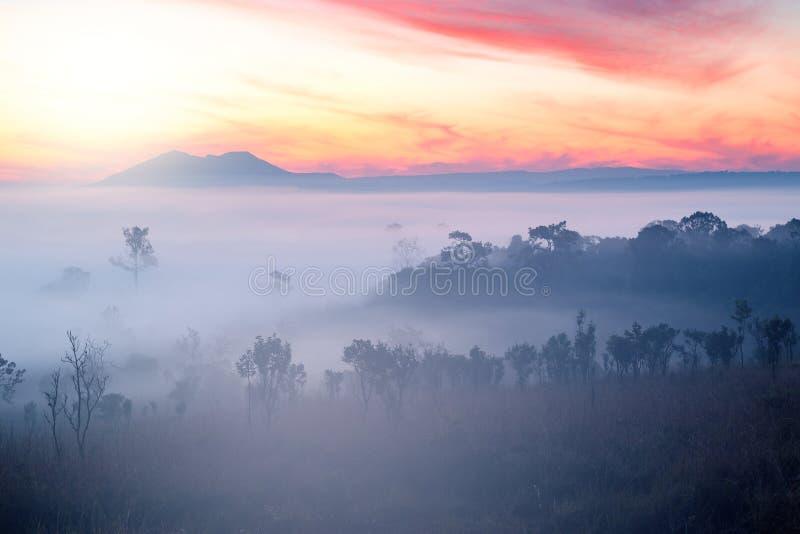 Όμορφο ομιχλώδες δάσος σύννεφων της Misty κατά τη διάρκεια των βουνών ανατολής στοκ εικόνα με δικαίωμα ελεύθερης χρήσης