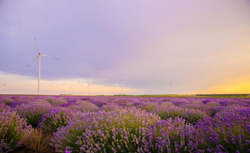 Όμορφο δονούμενο ηλιοβασίλεμα πέρα από έναν lavender τομέα με τον ανεμοστρόβιλο στοκ φωτογραφία