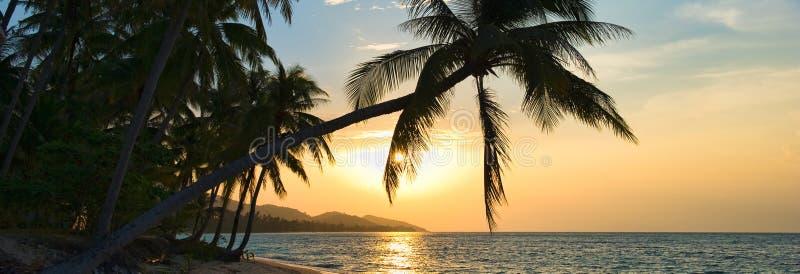 Όμορφο οριζόντιο συναρπαστικό ηλιοβασίλεμα εικόνας πέρα από τον κόλπο του Σιάμ στο νησί Samui στο ηλιοβασίλεμα, κλίνοντας φοίνικε στοκ εικόνα με δικαίωμα ελεύθερης χρήσης