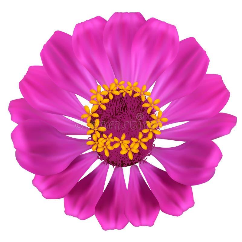 Όμορφο λουλούδι. διανυσματική απεικόνιση