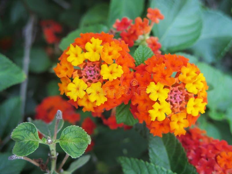 όμορφο λουλούδι στοκ φωτογραφία με δικαίωμα ελεύθερης χρήσης