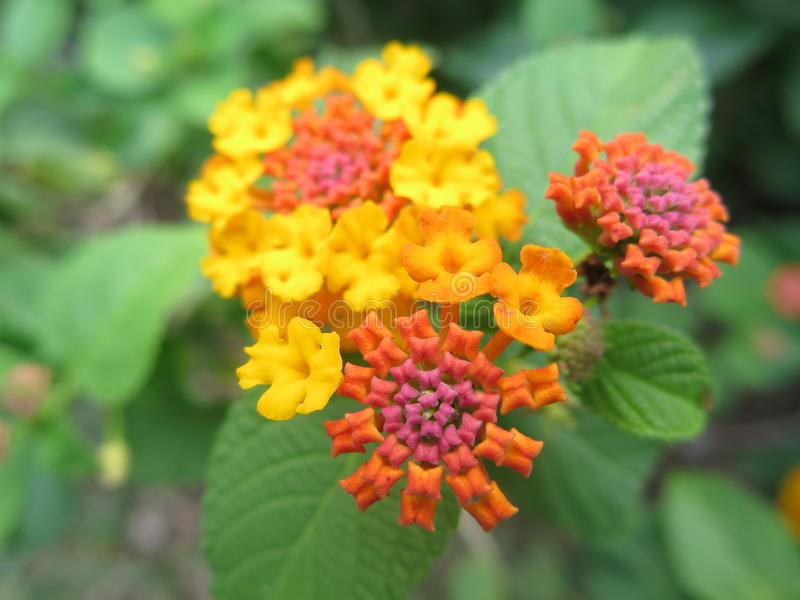 όμορφο λουλούδι στοκ εικόνες με δικαίωμα ελεύθερης χρήσης